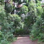 滝と自然が素晴らしいマウナウィリ・フォールズ!飛び込みスポットとして人気!